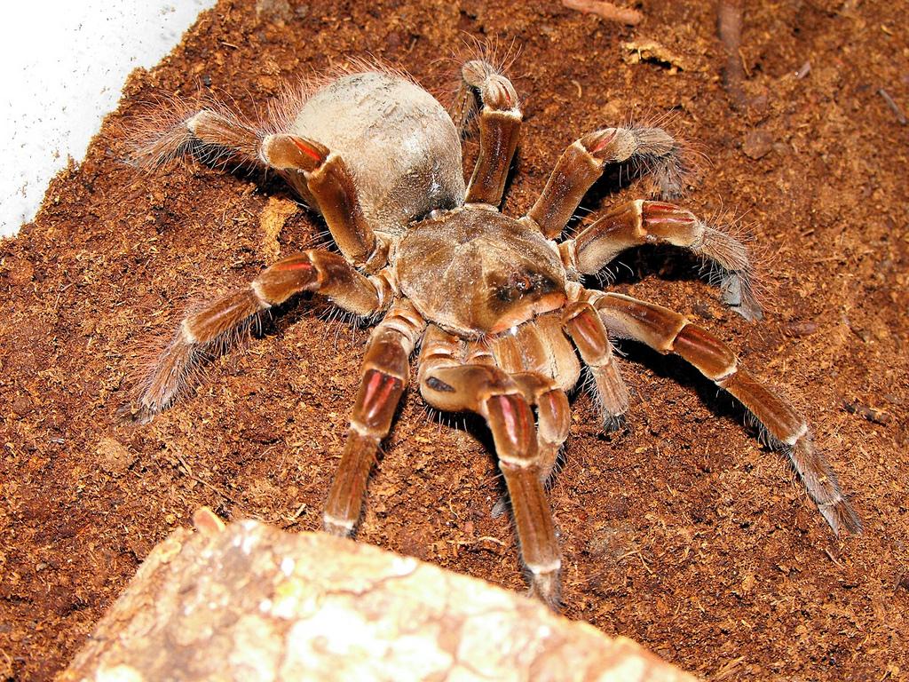 перетаскивать картинка большой паук в мире запрос