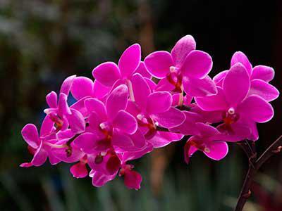 Image result for ljubičasta orhideja značenje